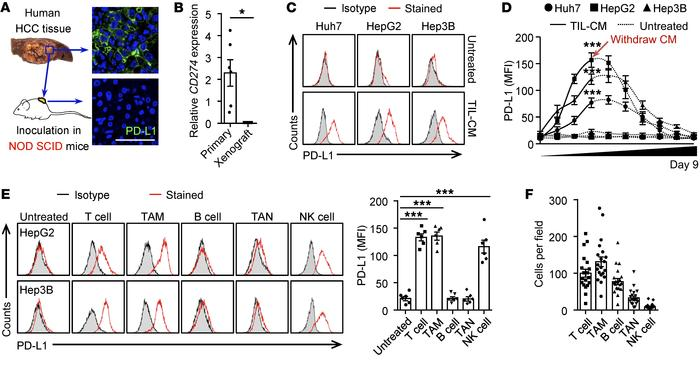 Tumor macrophages and T cells effectively induce cancer cell PD-L1. (A a...
