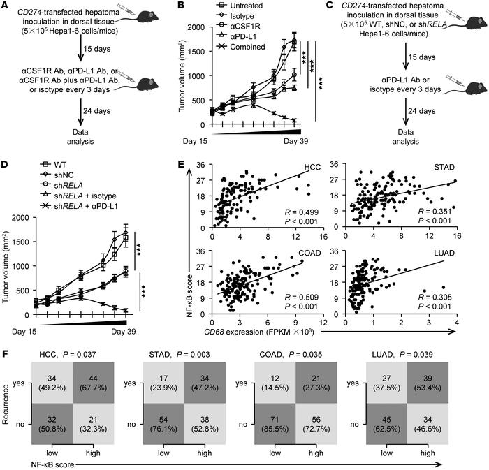 Suppressing macrophage-elicited NF-κB activation augments immunotherapeu...