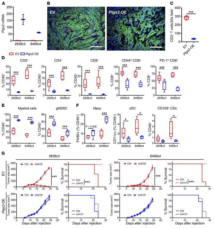 Tumor cell–intrinsic Ptgs2 promotes T cell–low TME and resistance to imm...
