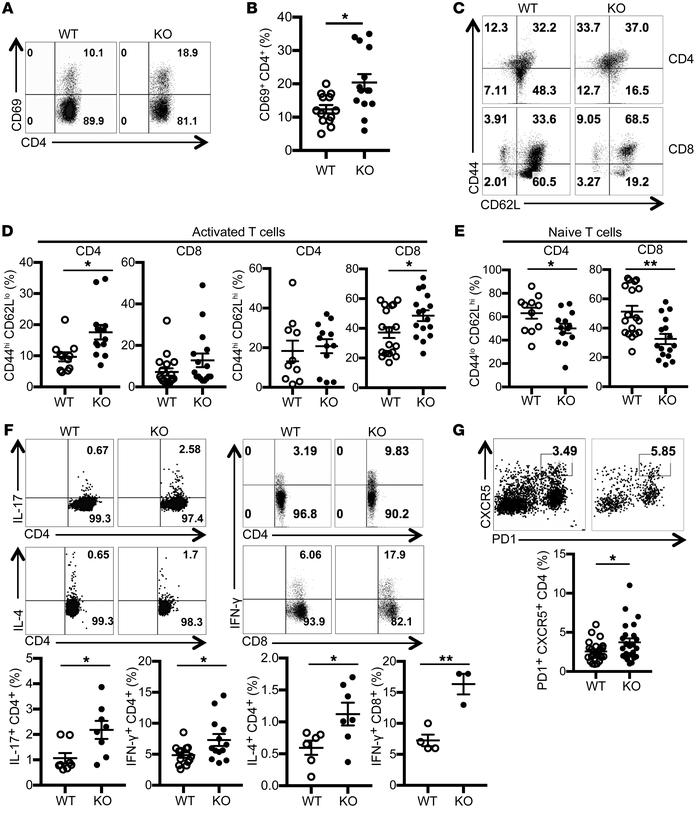 T cells from Srsf1-cKO mice have a hyperactive phenotype and produce pro...