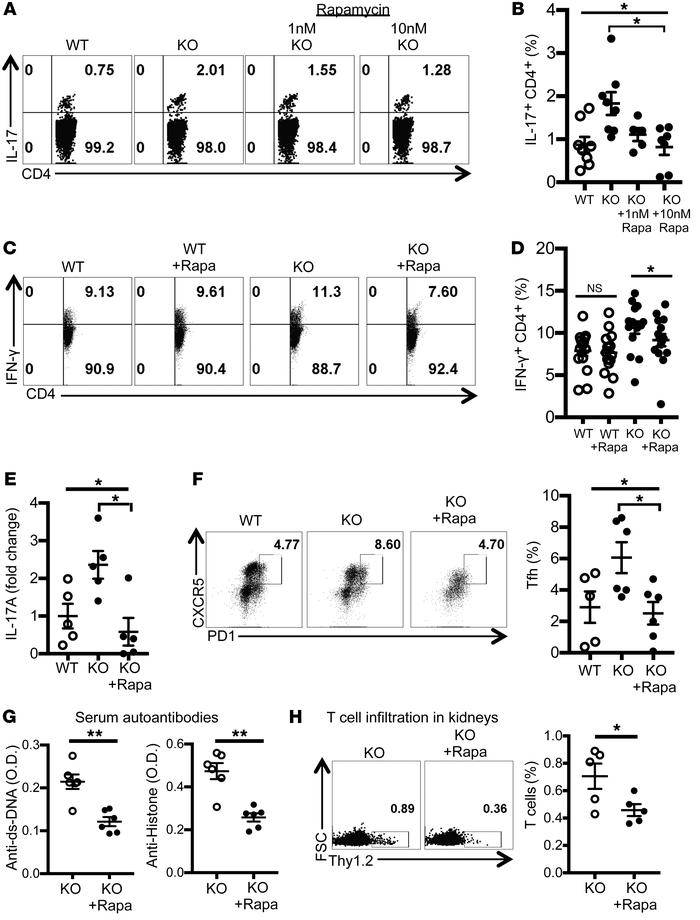 Rapamycin treatment reduces proinflammatory cytokine production by T cel...