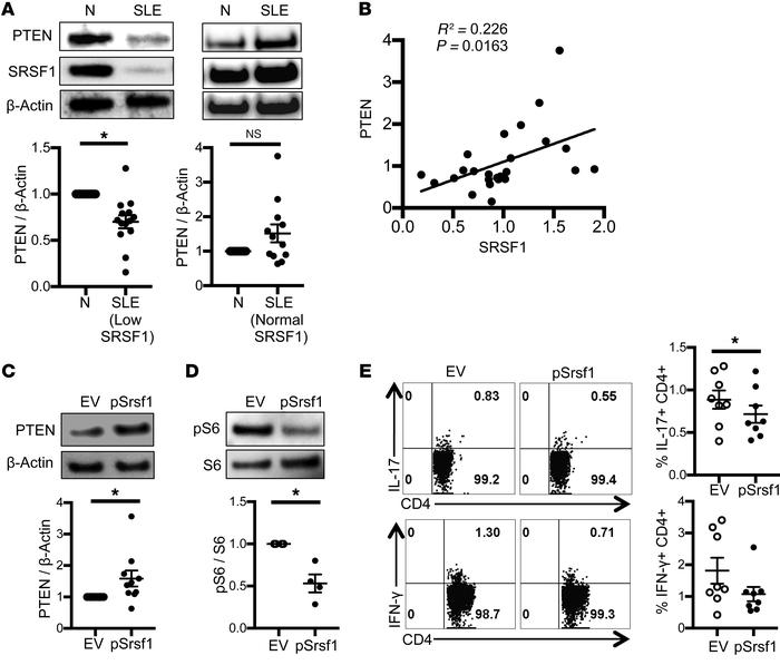 PTEN is decreased in T cells from patients with SLE and correlates with ...