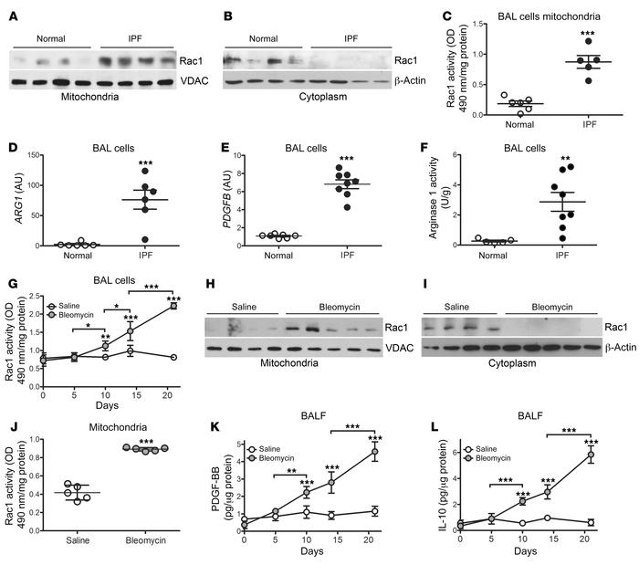 Mitochondrial Rac1 activity is increased in IPF BAL cells. Immunoblot an...