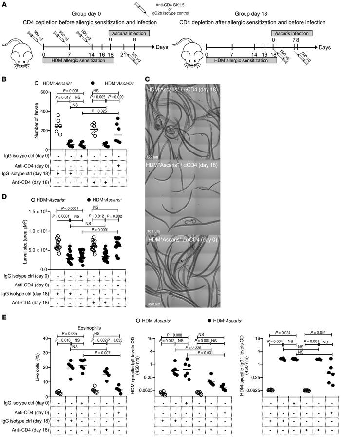 HDM-induced immunity to Ascaris parasites is dependent on eosinophils dr...