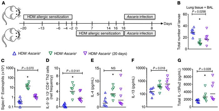 HDM allergic sensitization induces a persistent protective type 2 immuni...