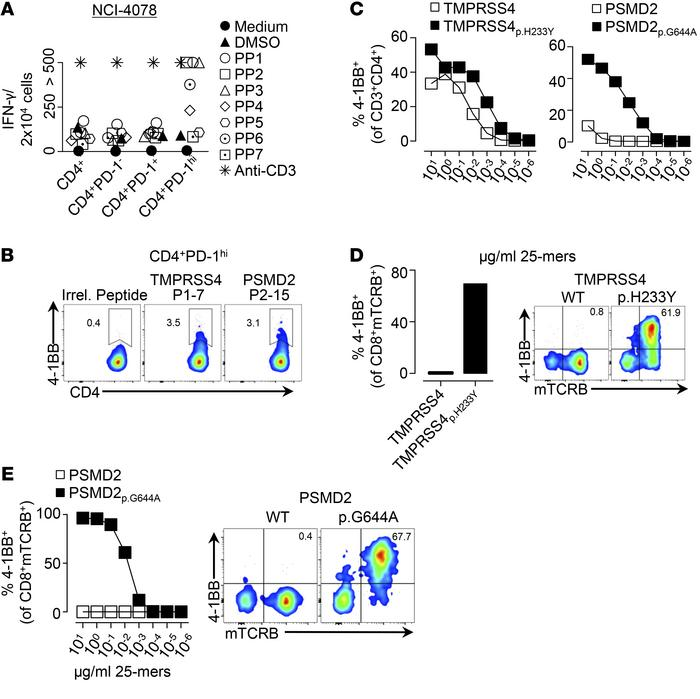 Detection of circulating CD4+ neoantigen-specific lymphocytes in a patie...