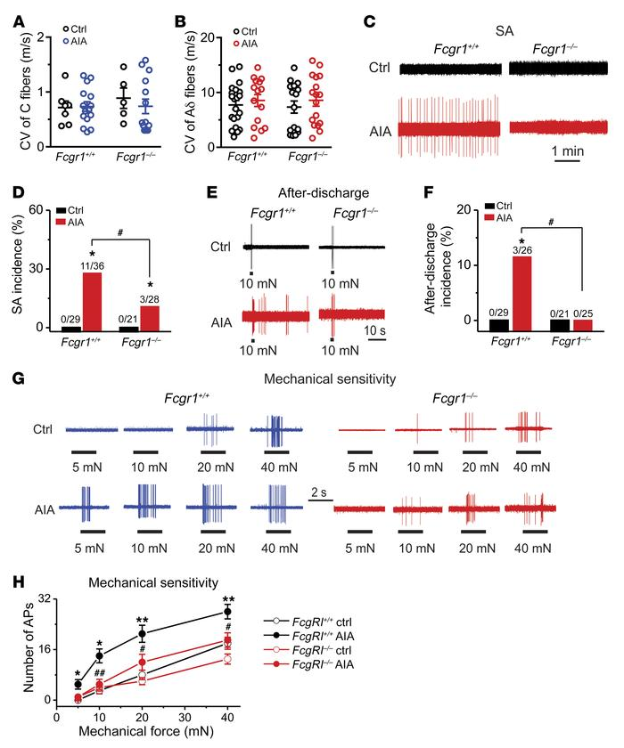 FcγRI contributes to hyperactivity of joint sensory neurons following AI...