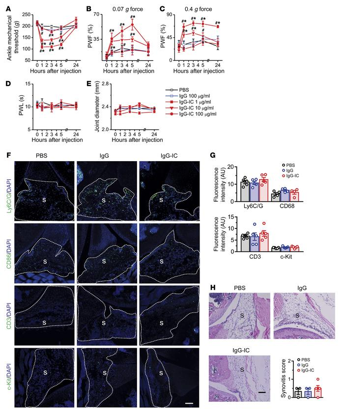 IgG-IC elicits acute articular hypernociception in naive mice. (A–E) Mic...
