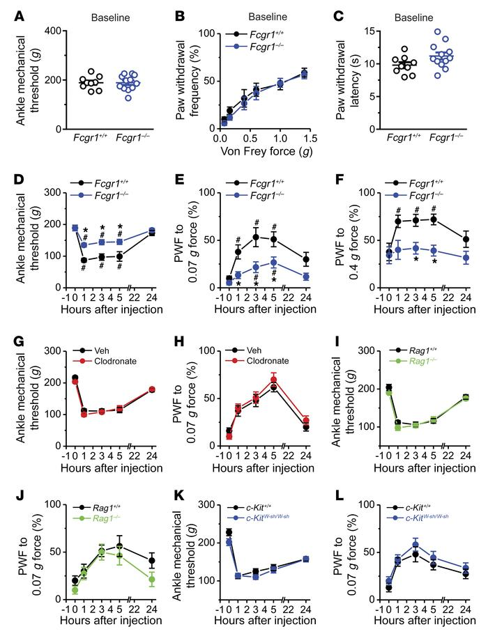FcγRI mediates IgG-IC–induced acute joint nocifensive behaviors in mice....