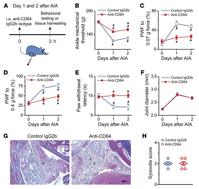 Acute pharmacological blockade of FcγRI attenuates AIA-associated pain i...