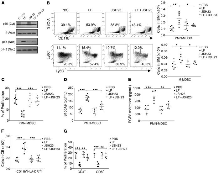 LF regulates MDSC function via NF-κB transcription factor. (A) Western b...