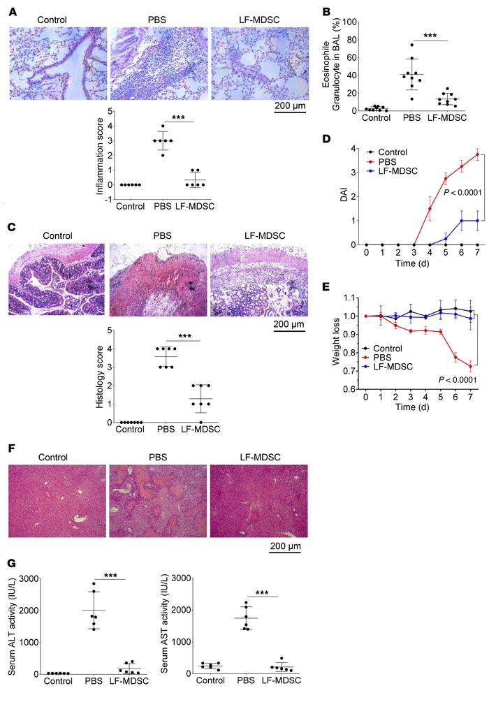 Therapeutic effect of LF-MDSCs under inflammatory conditions. (A and B) ...