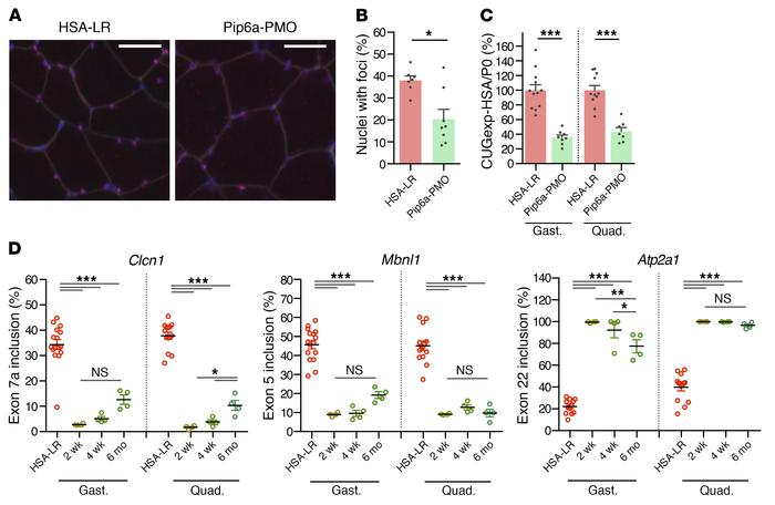 Treatment with Pip6a-PMO normalizes DM1-specific phenotype. HSA-LR mice ...