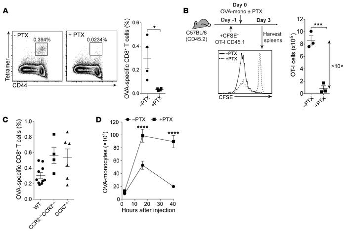 PTX treatment abrogates monocyte-induced CD8+ T cell responses. (A) Repr...