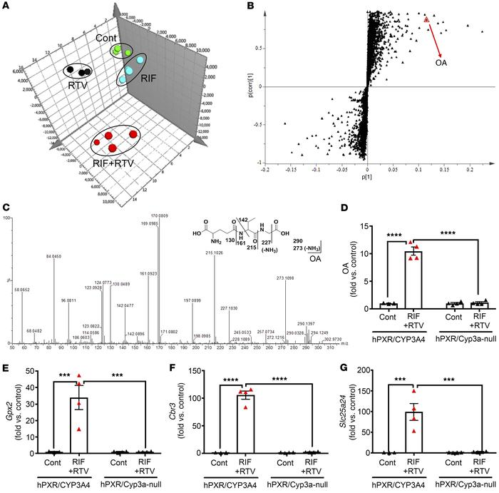 Metabolomics reveals oxidative stress in the liver of hPXR/CYP3A4 mice p...