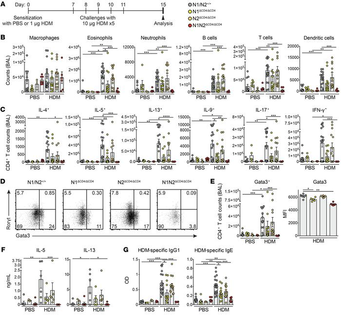 Notch1/2 expression on CD4+ T cells is required for AAI induction. (A) A...
