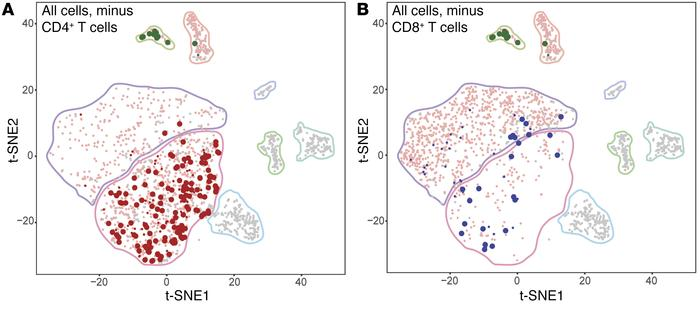 Analysis of clonally expanded lymphocyte cells. t-SNE projection of all ...