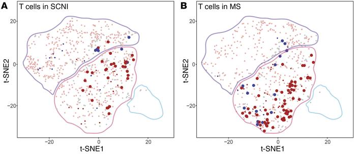 Analysis of clonally expanded T cells in SCNI and MS. t-SNE projection o...