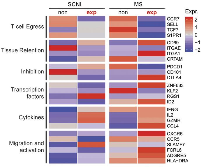 Heatmap of gene expression levels of nonexpanded and expanded CD8+ T cel...