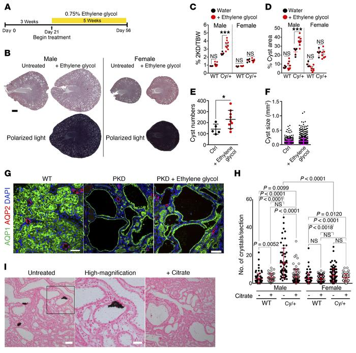 Chronic CaOx crystal deposition leads to increased cystogenesis and dise...