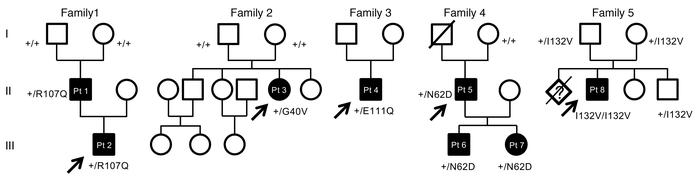 Pedigrees of the 5 families carrying SSBP1 mutations. Affected individua...