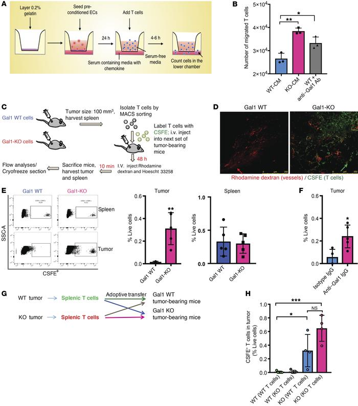 Gal1 mediates T cell exclusion from the tumor microenvironment by inhibi...