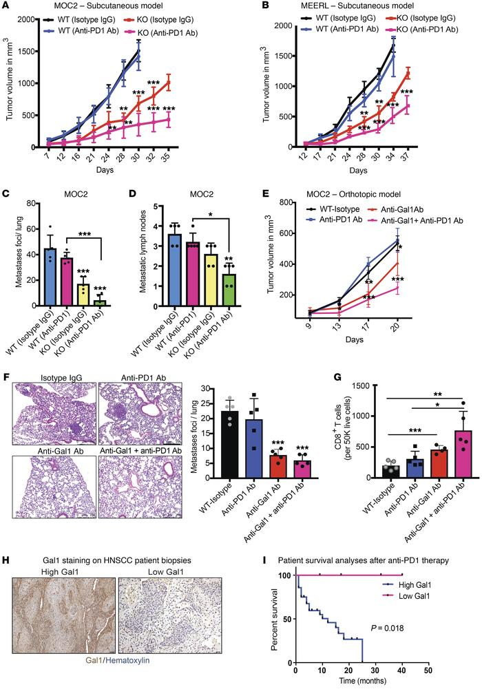 Gal1 inhibition reverses PD1 blockade resistance in a HNC model. Tumor g...