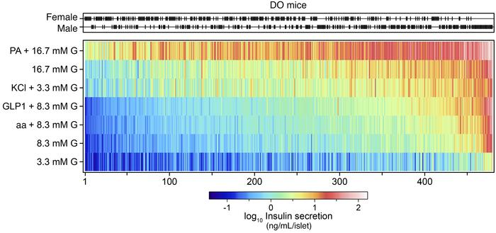 Ex vivo insulin secretion measurements from 479 DO mice maintained on a ...