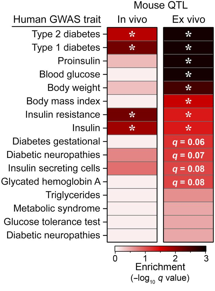 Insulin secretion QTL enrich for diabetes GWAS SNPs. SNPs nominally asso...