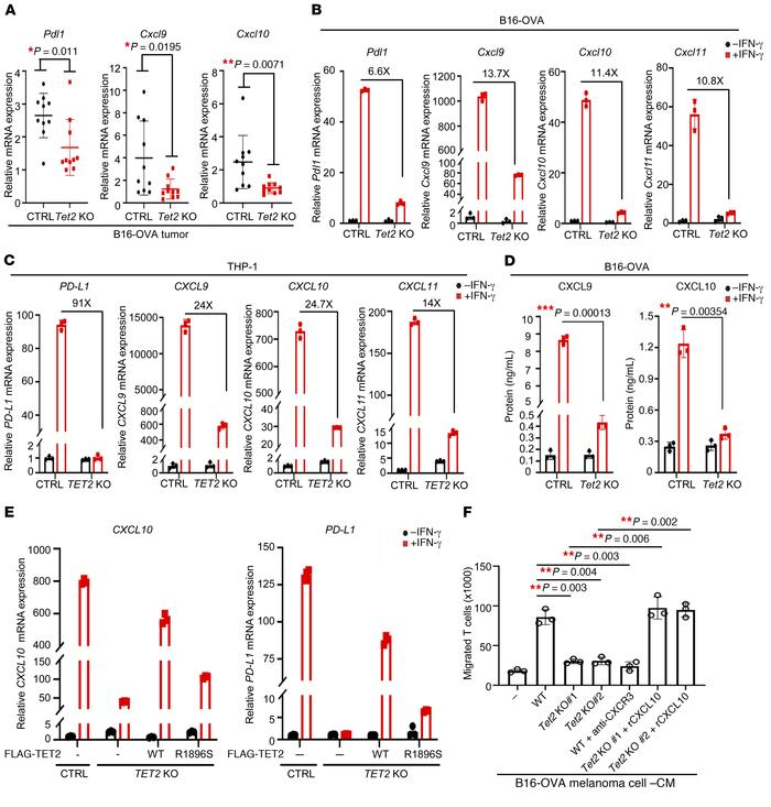 Loss of TET2 impairs Th1-type chemokines and PD-L1 expression. (A) Delet...