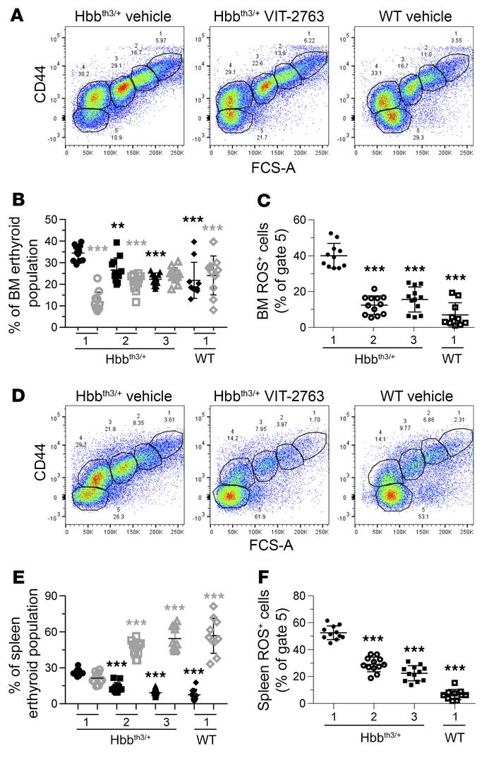 VIT-2763 treatment improved the ineffective erythropoiesis in BM and spl...
