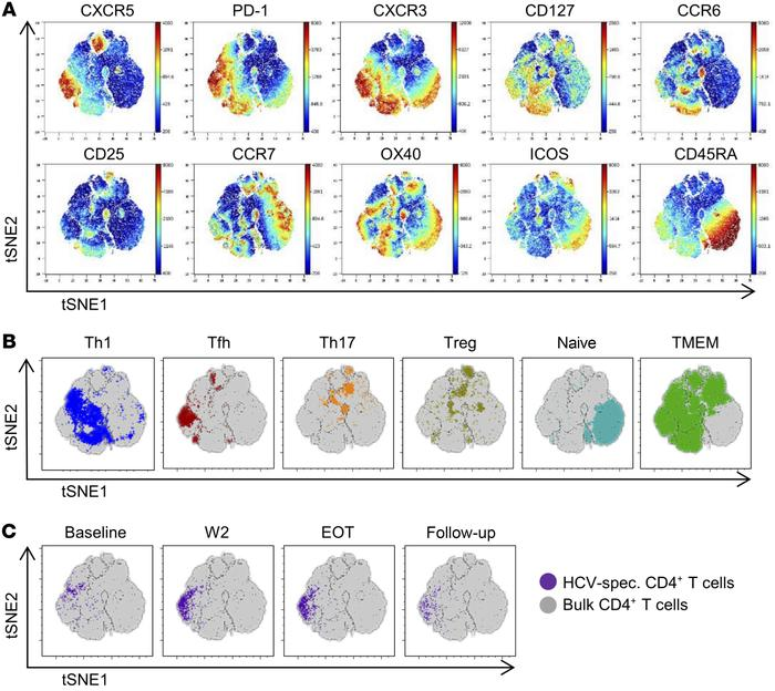Phenotypic shift of HCV-specific CD4+ T cells after initiation of antivi...