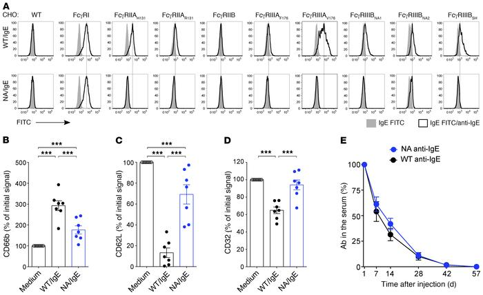 Fc-engineered anti-IgE antibodies display markedly reduced FcγR-binding ...