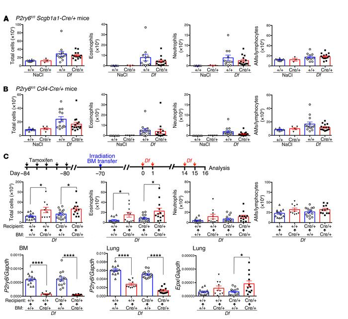 P2Y6 receptors on hematopoietic cells are involved in protection from Df...