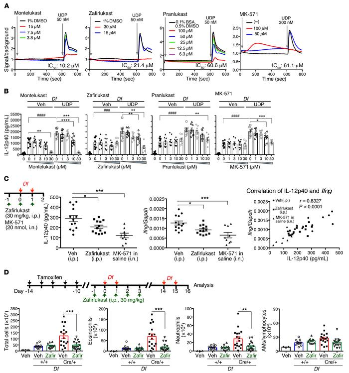 CysLT1R antagonists inhibit early P2Y6 receptor–dependent signaling that...