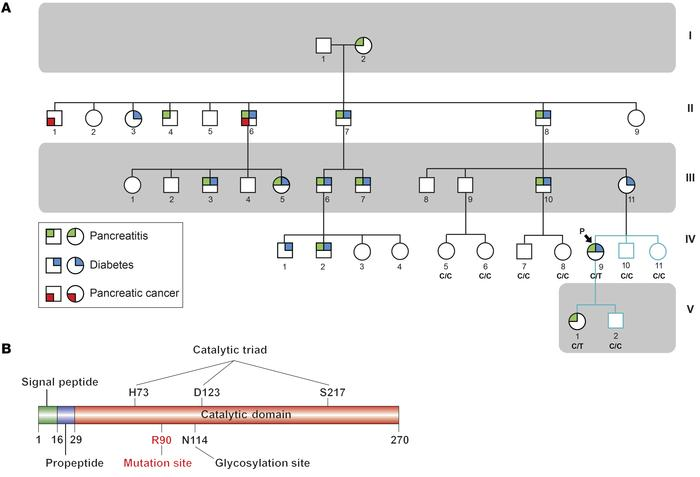 Identification of a pathogenic mutation in a family with hereditary panc...