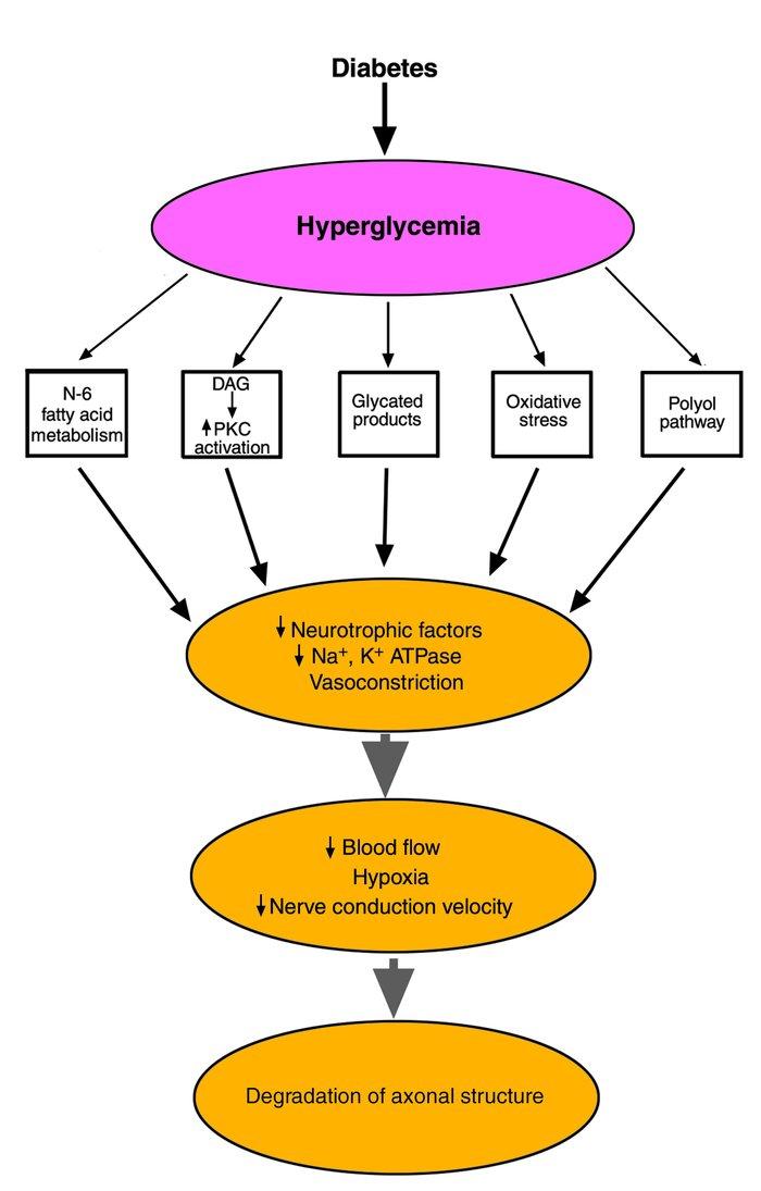 Peripheral neuropathy how it progresses