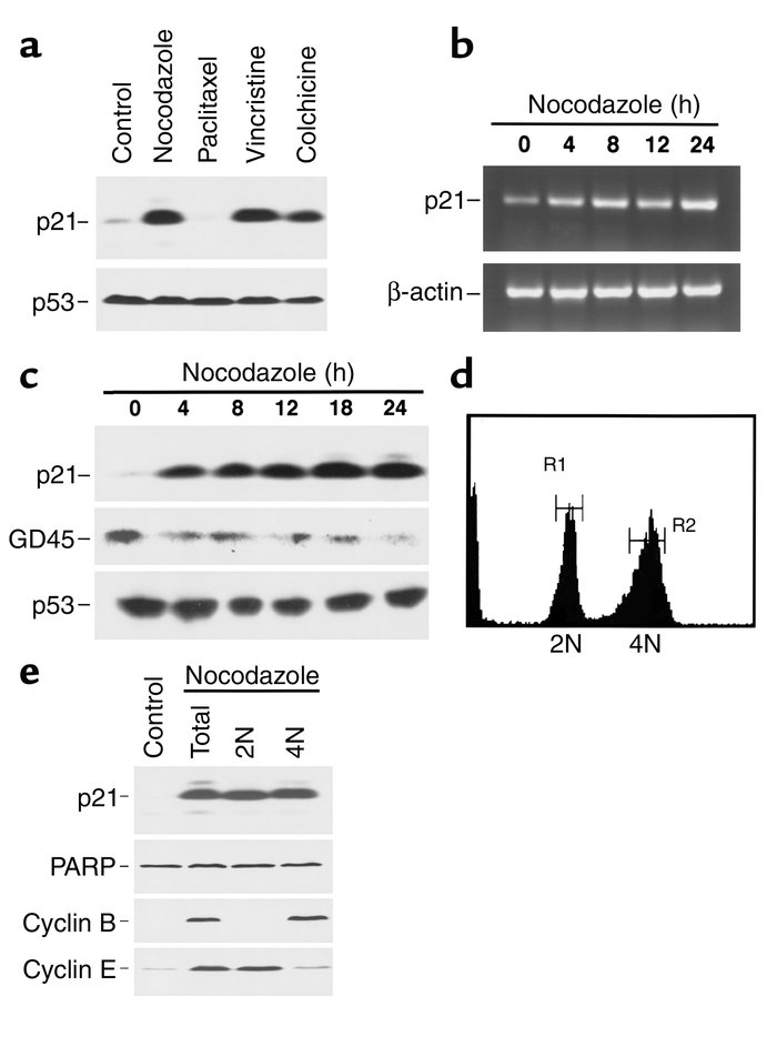 Increased p21 expression after treatment of MDA-MB-468 cells with microt...