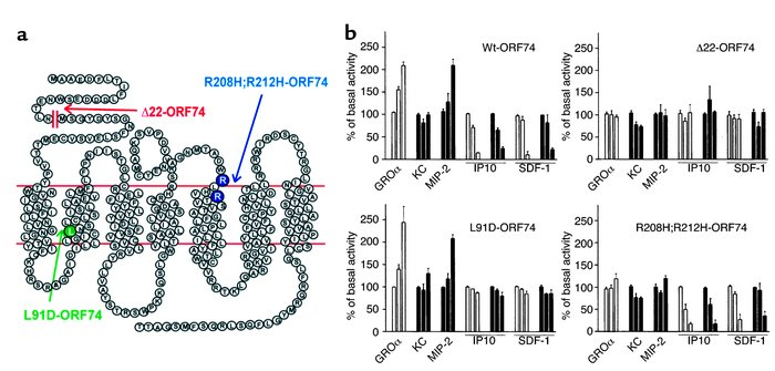 Regulation of ORF74 activity by human and murine CXC chemokines. (a) Dia...