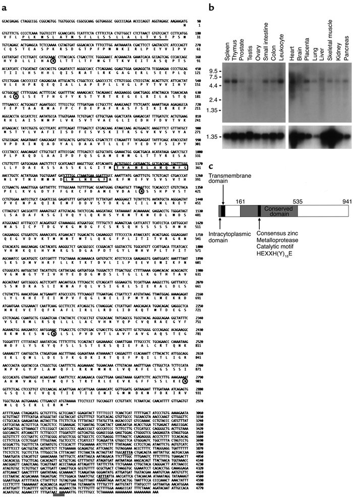 Characterization of ARTS-1 mRNA and protein. (a) ARTS-1 nucleotide and a...
