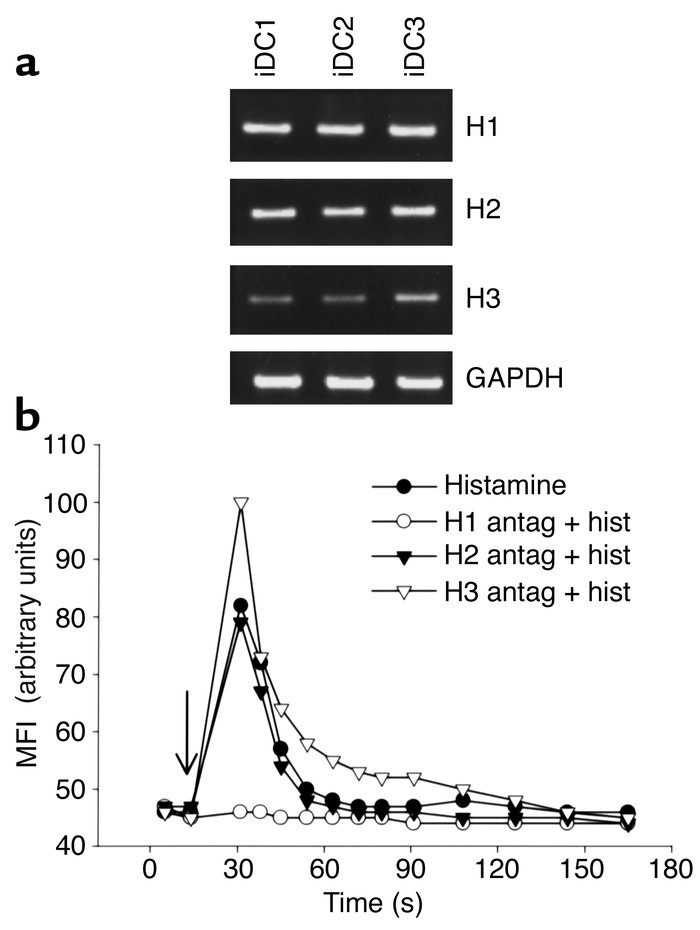 iDCs express three histamine receptors, and H1 is functionally active. (...