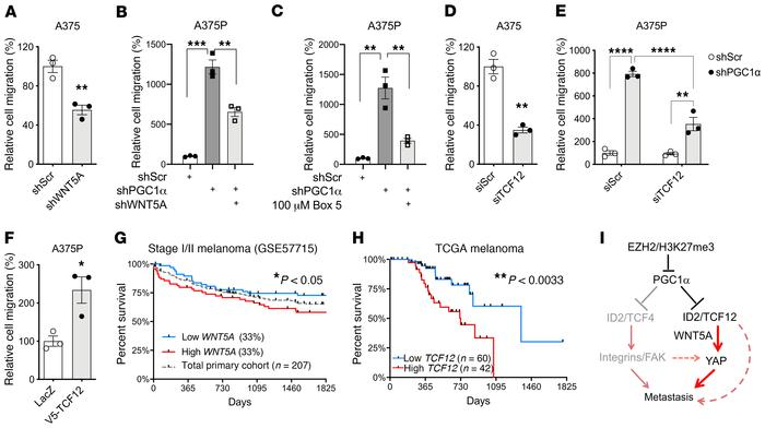 TCF12/WNT5A regulates melanoma migration. (A) In highly invasive A375 me...