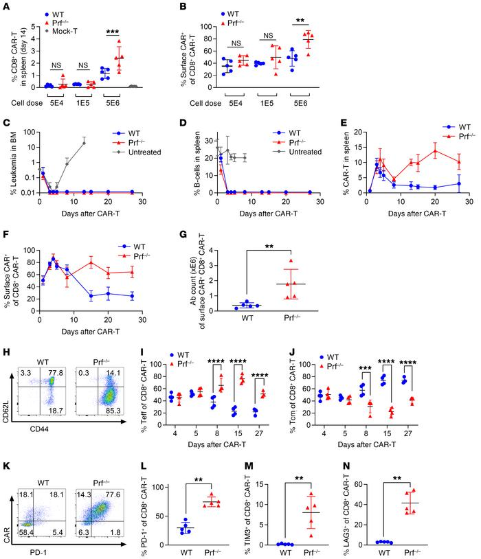 Prf–/– CAR T cell undergo a late reexpansion in the absence of detectabl...