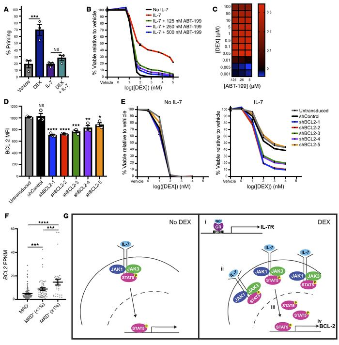 BCL-2 mediates IL-7–induced DEX resistance. (A) Percentage of priming of...