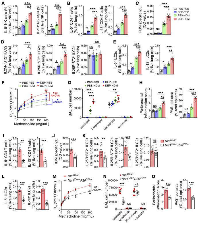 DEP NK cells drive HDM-induced AAD. (A–H) Model of early life HDM-induce...