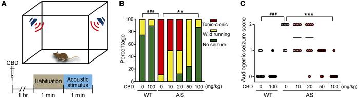 CBD attenuates wild running and tonic-clonic seizures induced by acousti...