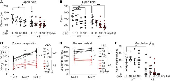 CBD has moderate sedative effects in AS model mice. (A and B) WT and AS ...