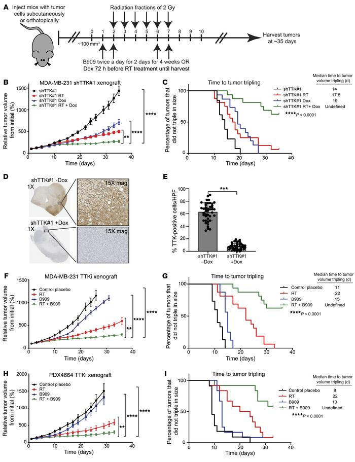 Combination treatment of TTK inhibition and RT reduces basal-like BC tum...