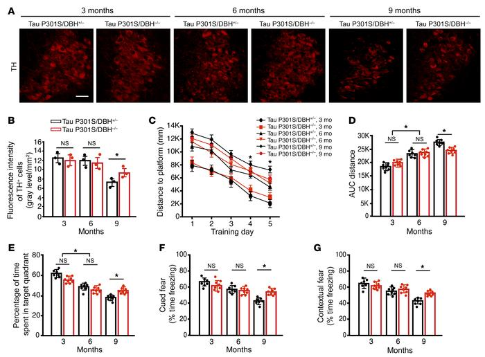 LC neurodegeneration and cognitive impairment in P301S mice are dependen...