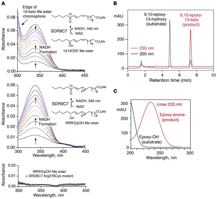SDR9C7 catalyzes NAD+-dependent oxidation of 13-hydroxy-linoleate deriva...